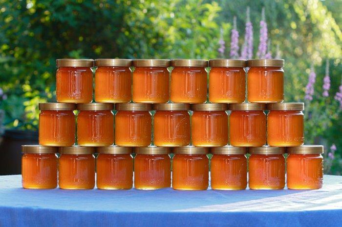 Мед в Израиле - Север, Центр, Юг