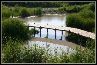 Нахаль Таниним (крокодилий ручей)